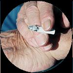Zigarette zwischen den verfärbten Fingernägeln